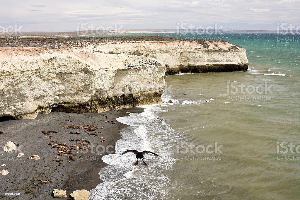 Marine Fauna stock photo