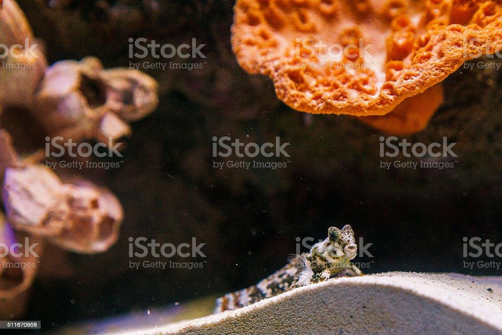 Marine Fish stock photo