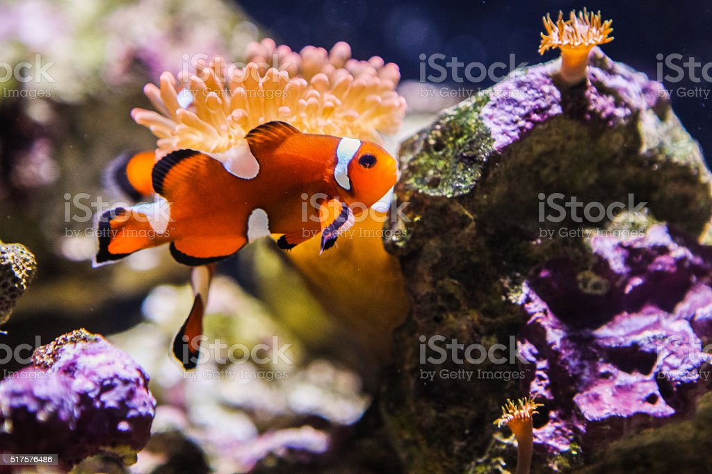 Marine fish stock photo