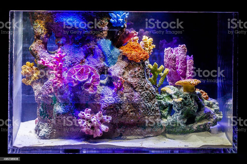 marine fish tank stock photo