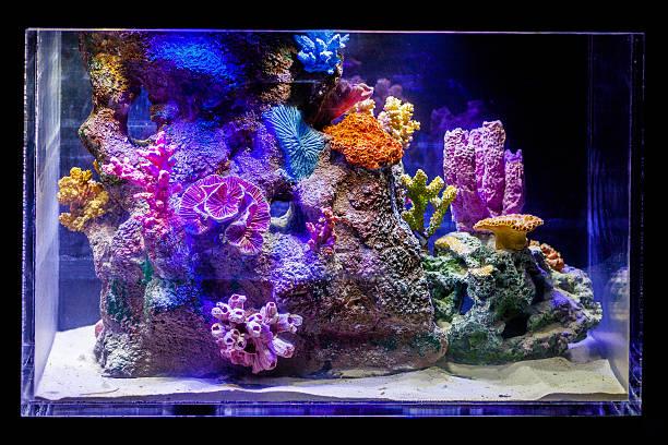 marine fish tank stock photo