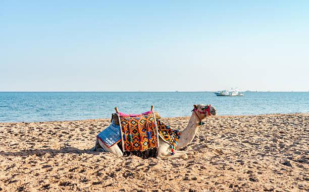 Marine landscape in Safaga, Egypt – Foto