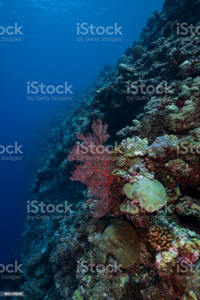 Marine life in Palau, Micronesia zbiór zdjęć royalty-free