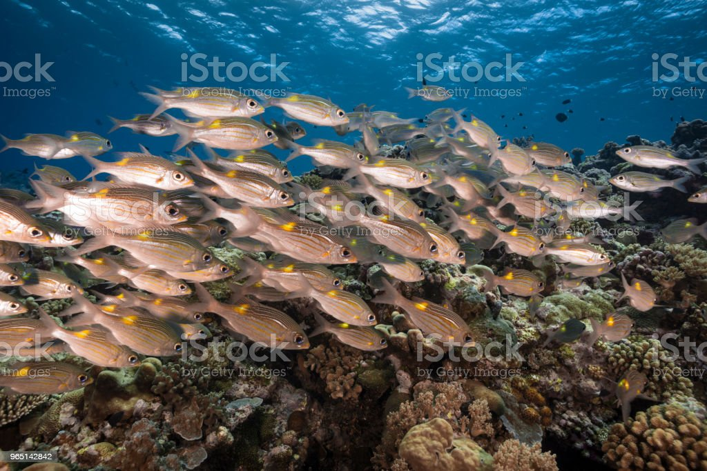Marine life in Palau, Micronesia royalty-free stock photo