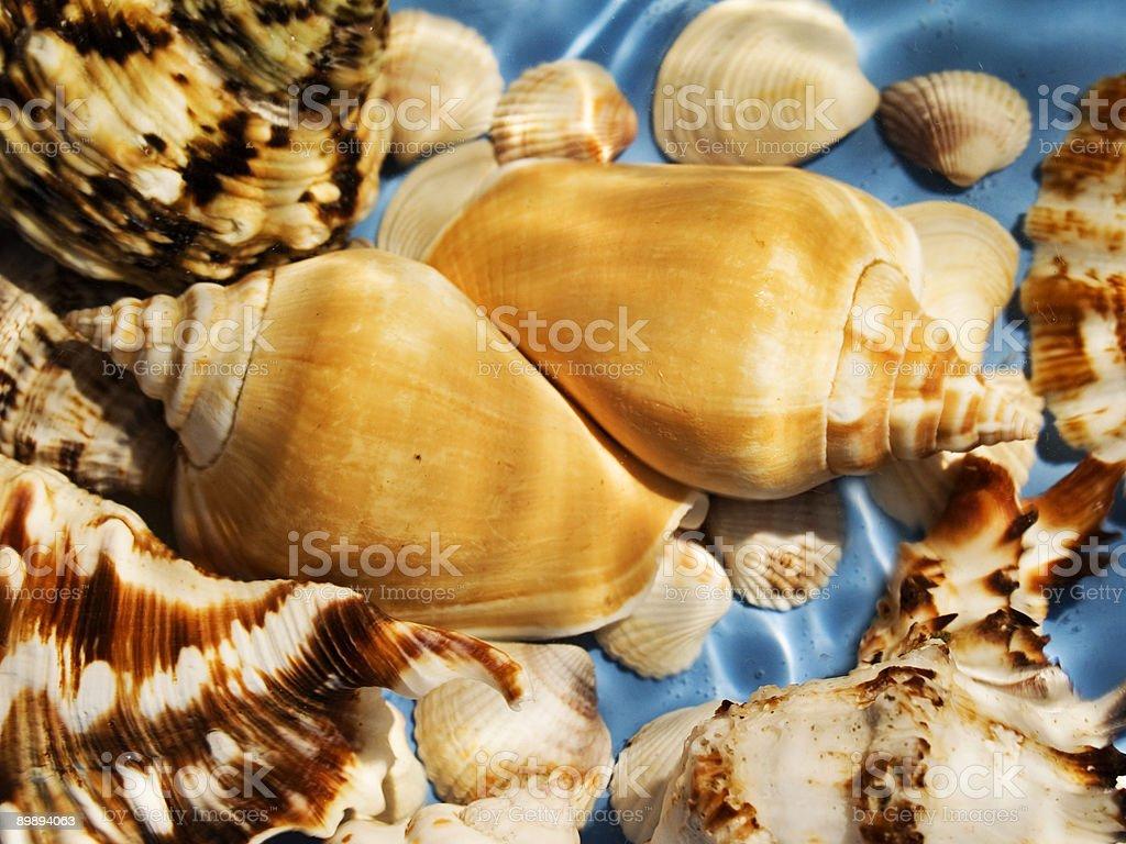 marine life royalty-free stock photo