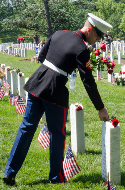 a marine places roses on graves arlington national cemetery - arlington national cemetery stock pictures, royalty-free photos & images