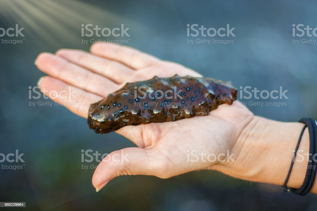 Marine sea lies on the hand, only the marine delicacy on the drawn out Palm, stock photo
