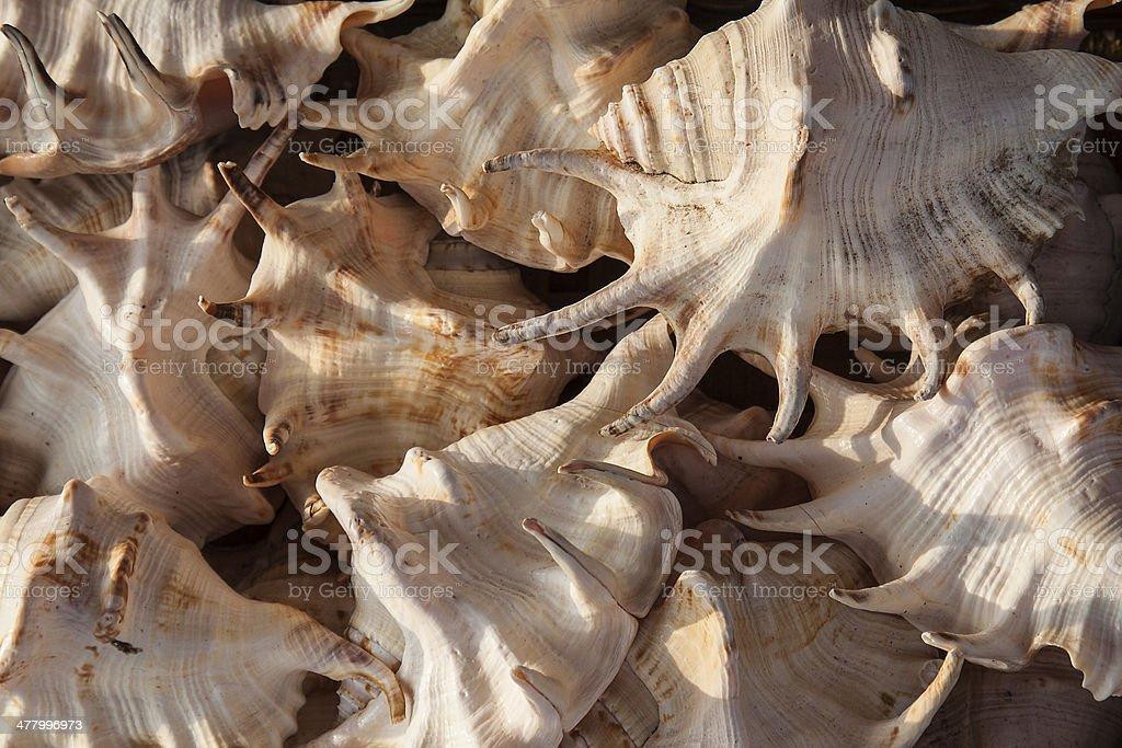 Marine shells at street shop royalty-free stock photo