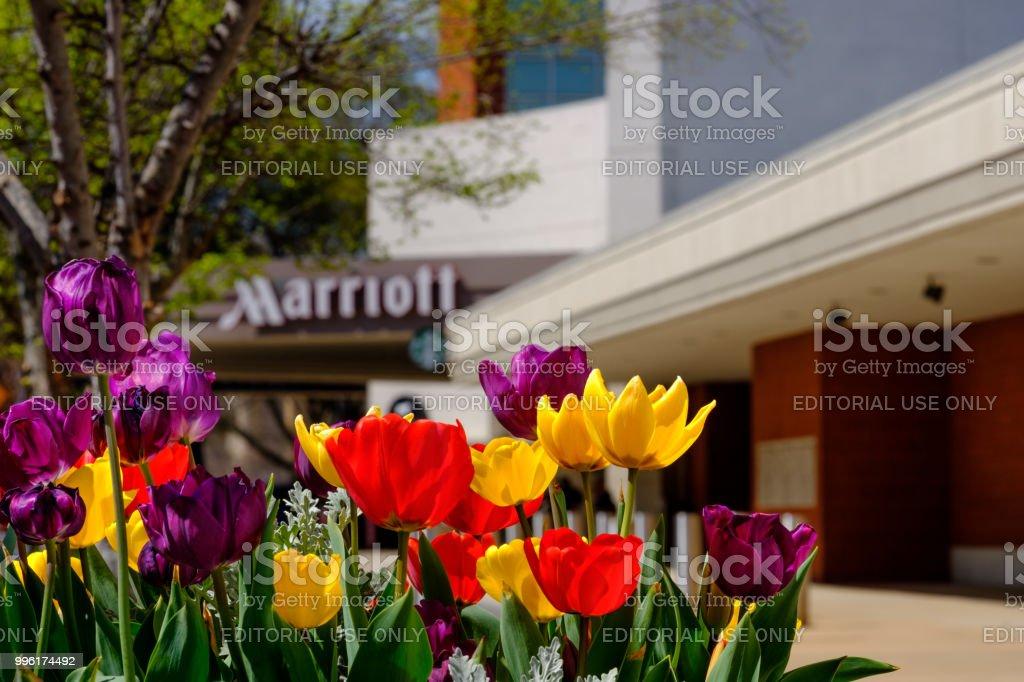 Mariott Hotel in Downtown Little Rock, Arkansas stock photo