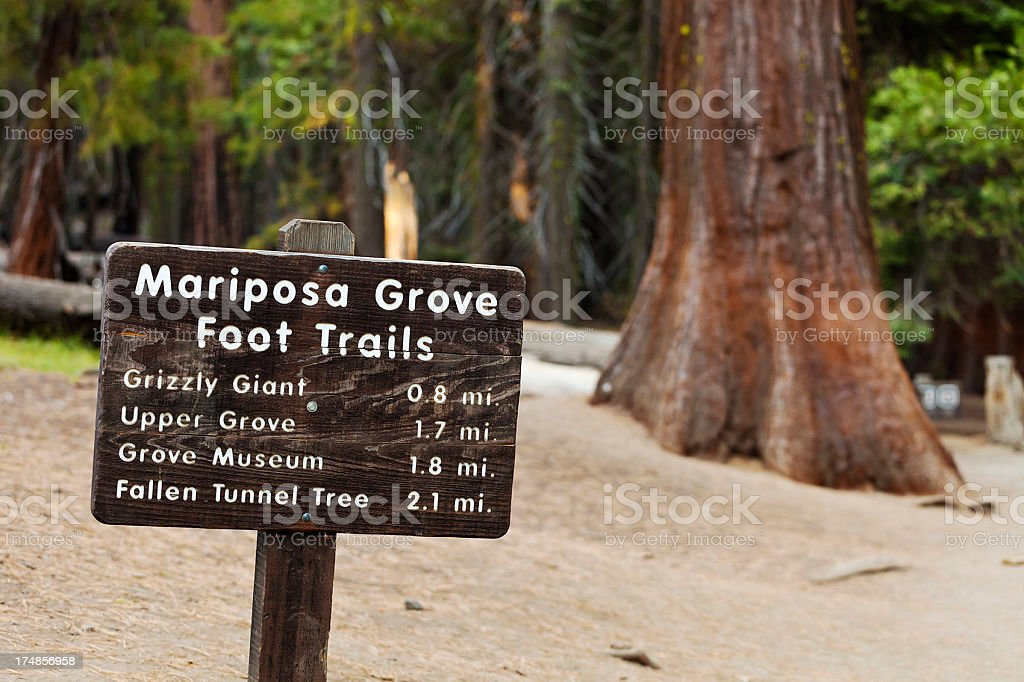 Mariposa Grove Of Sequoia Trees royalty-free stock photo