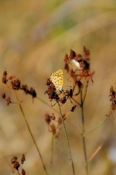 mariposa mariposa amarilla posada en una flor alas stock pictures, royalty-free photos & images