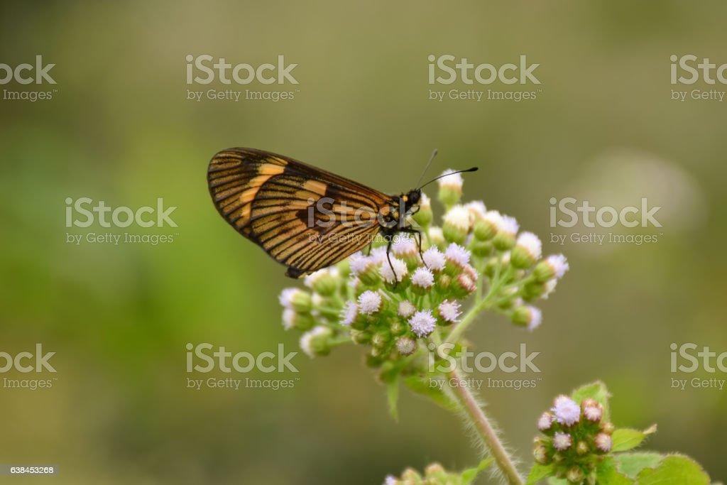 Mariposa stock photo