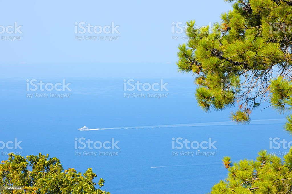 Maritime Pine Trees Framing Mediterranean Blue Sea View stock photo