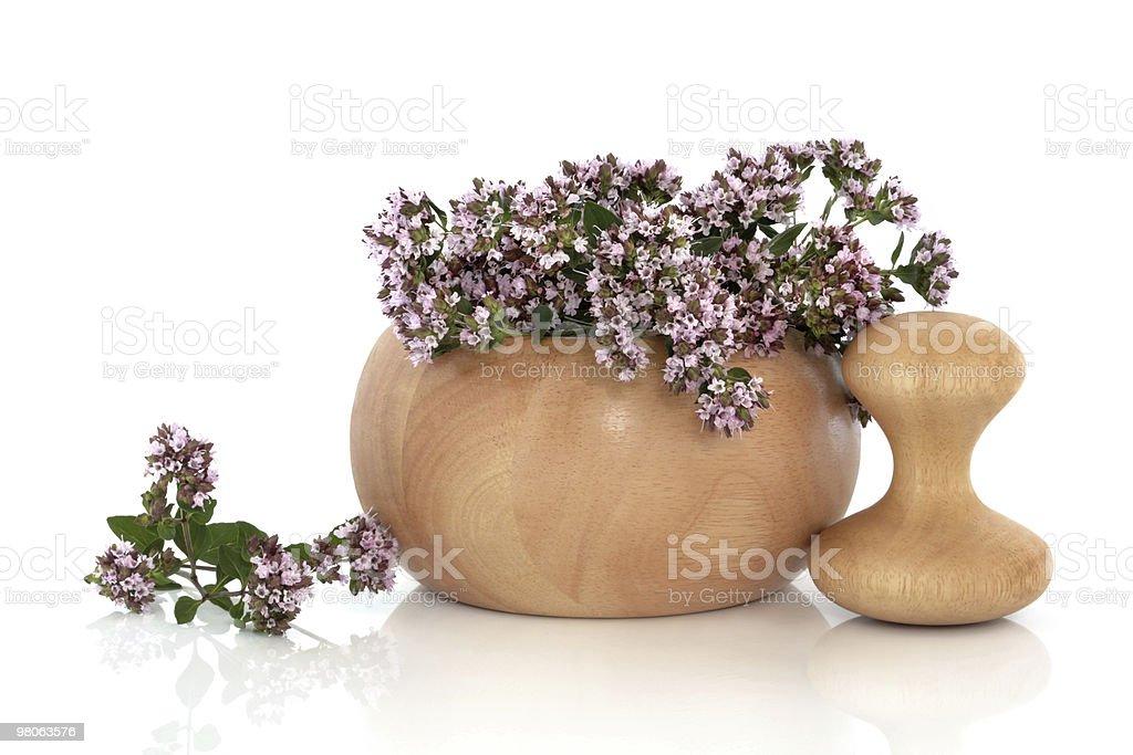 Maggiorana Herb fiori foto stock royalty-free