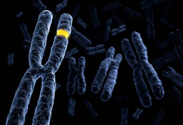 contrassegnato cromosoma - mutazione genetica foto e immagini stock