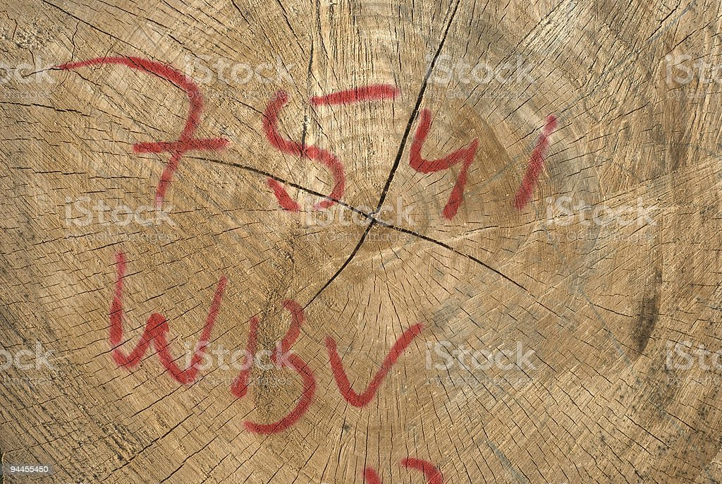 Marked Wood Cross Section royalty-free stock photo