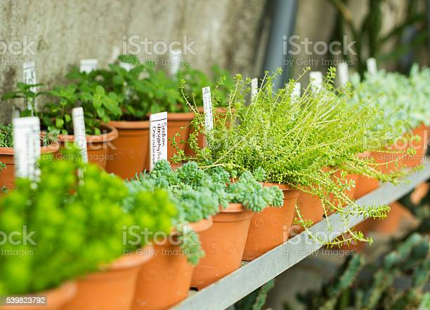 Market for sale plants many plants in pots picture id539823792?b=1&k=6&m=539823792&s=612x612&h= 3efilmq4t3kdrv57xv lckive3iuqs559kgr1plodu=