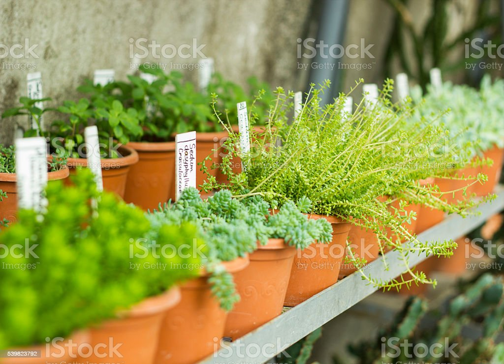 Market for sale plants. Many plants in pots stock photo