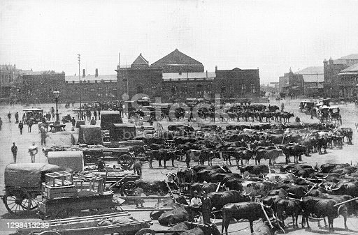 Market Square full of ox carts in Johannesburg, South Africa. Vintage photo etching circa 19th century.