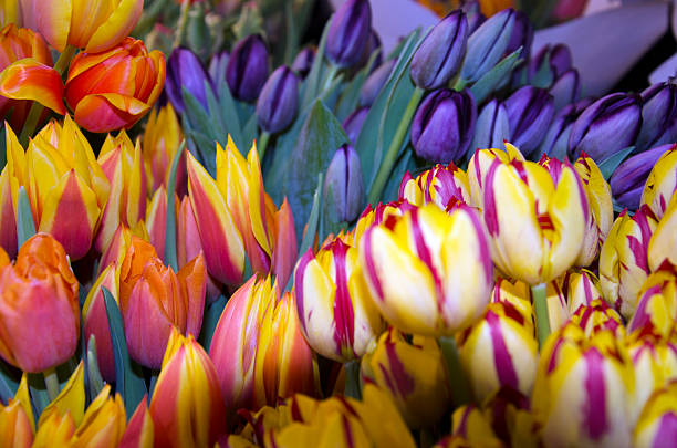Market Tulips stock photo