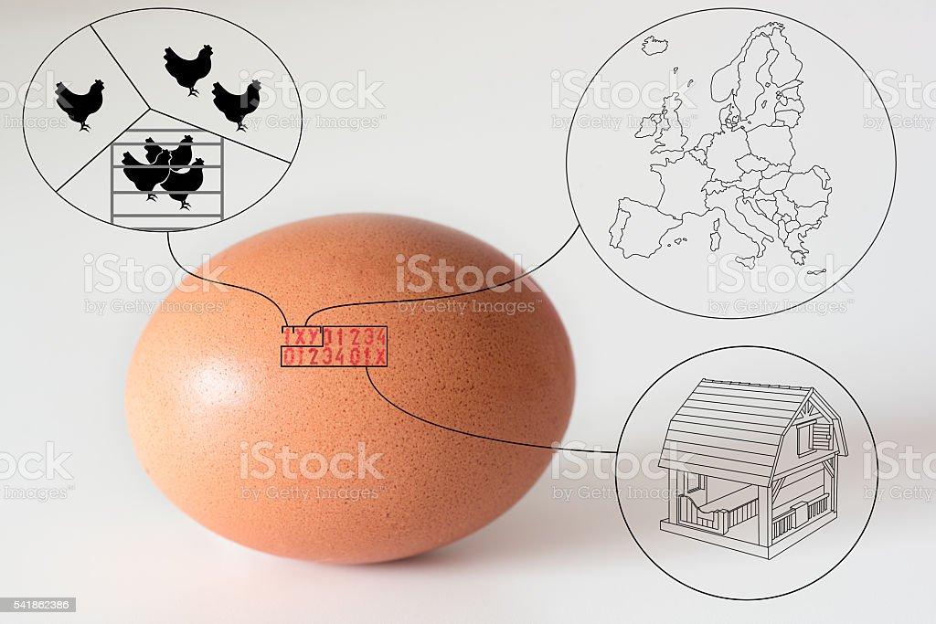 marking code numbers printed in egg explanation drawings - Foto de stock de Agricultura libre de derechos