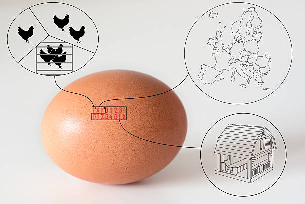 marking code numbers printed in egg explanation drawings - animal markings stock photos and pictures