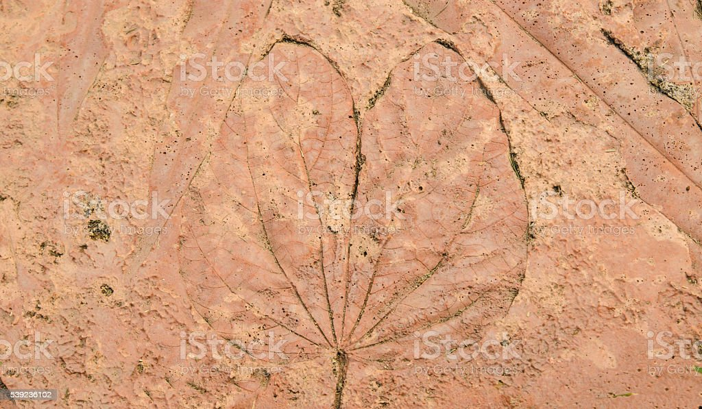 marks of leaf on the concrete pavement. royalty-free stock photo