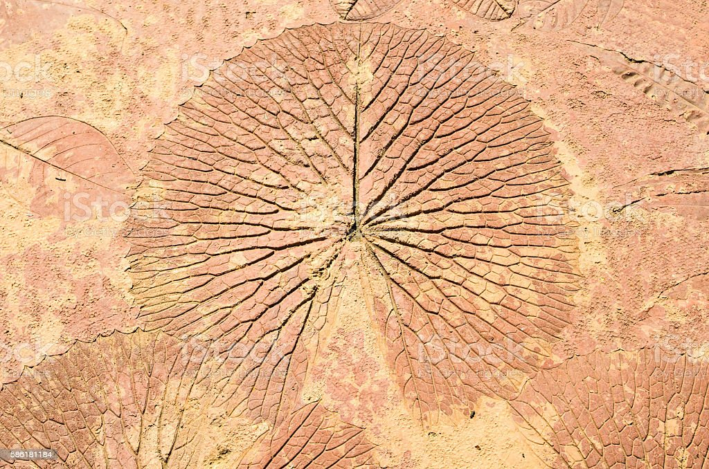 marks of leaf on the concrete pavement. stock photo