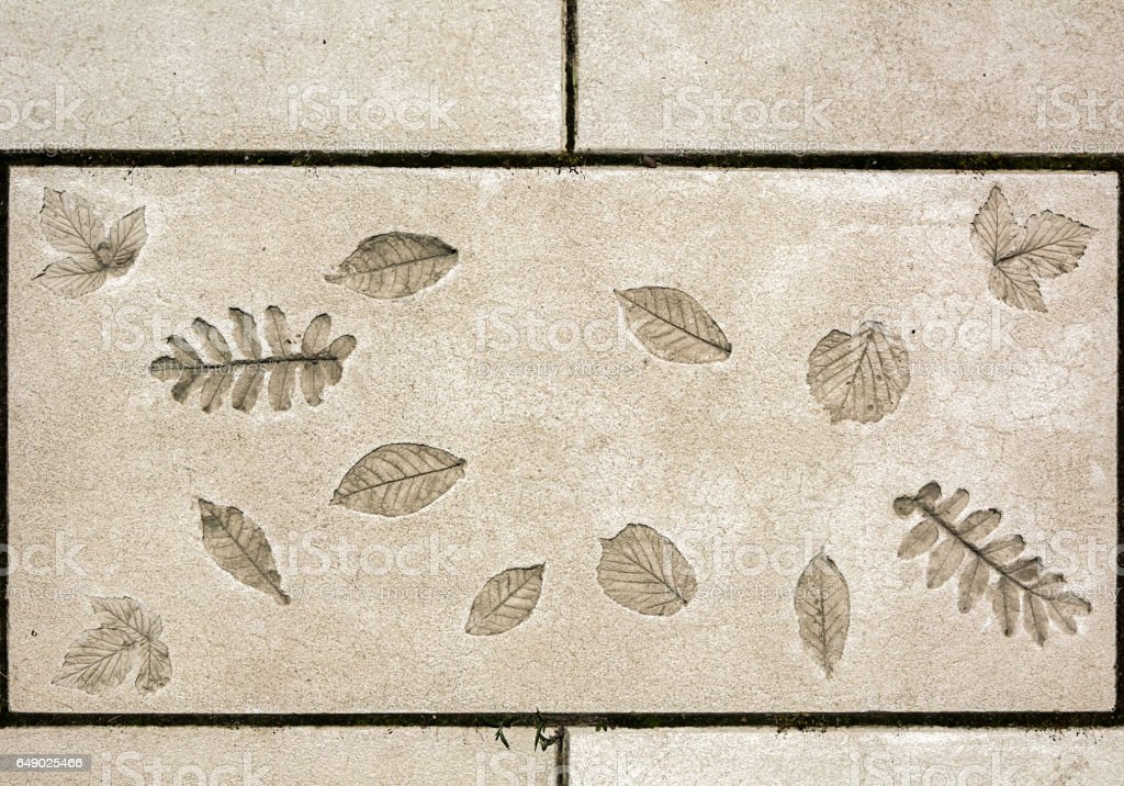 marks of leaf on the concrete stock photo