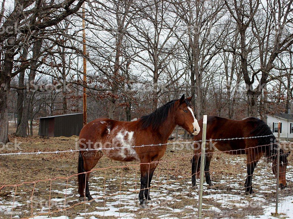 'X Marks The Spot' Horses' stock photo