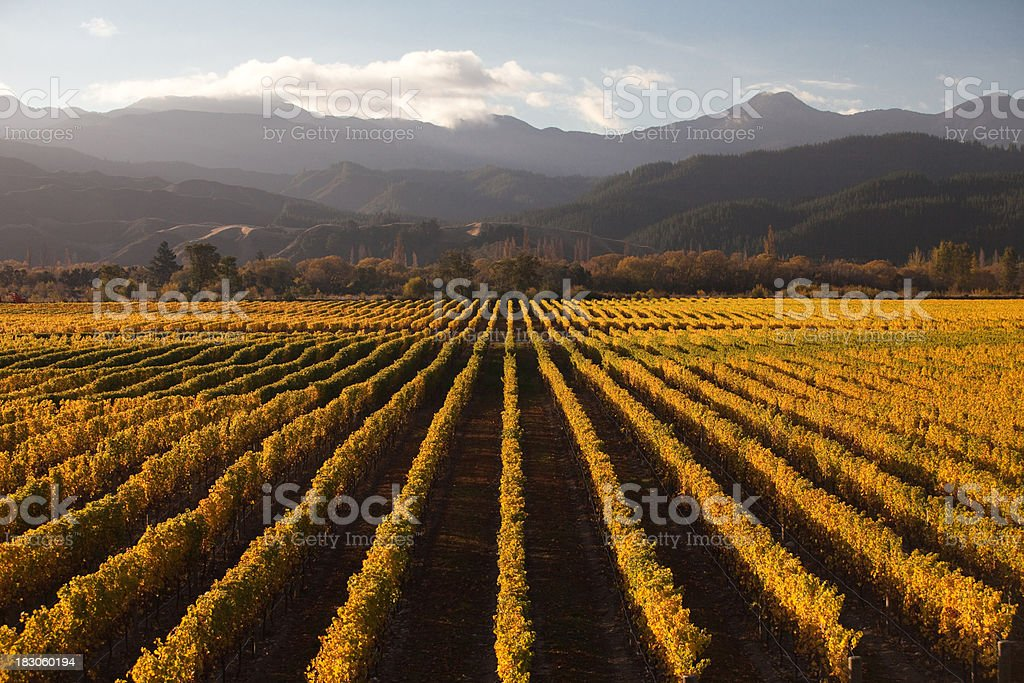 Marlborough Winery at Sunset royalty-free stock photo