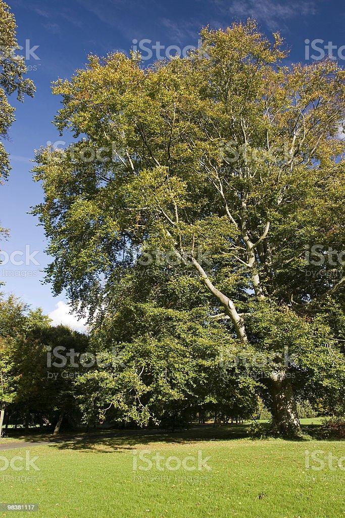 Marley Park - Dublin royalty-free stock photo