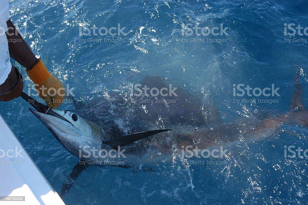 Marlin 2 stock photo