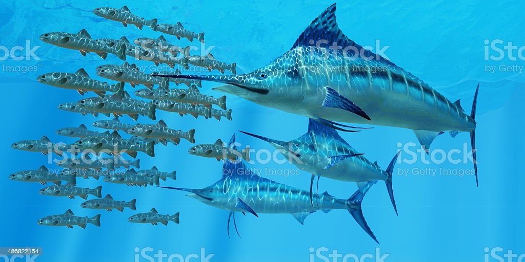 Marlin after a Fish School stock photo