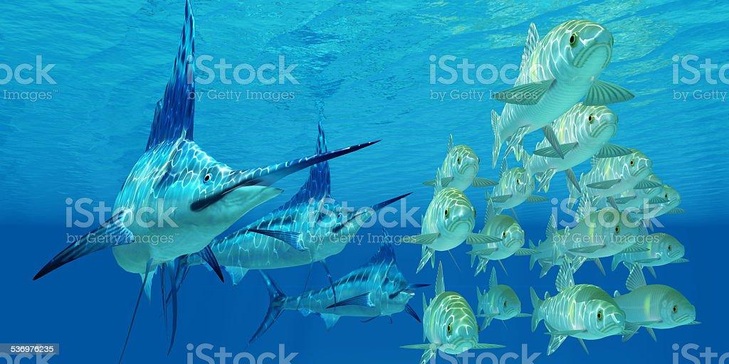 Marlin attack Ayu Fish stock photo