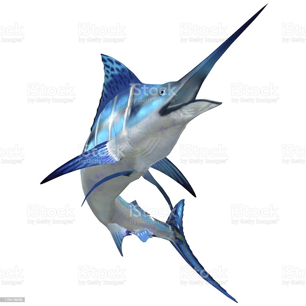 Marlin Fish on White royalty-free stock photo