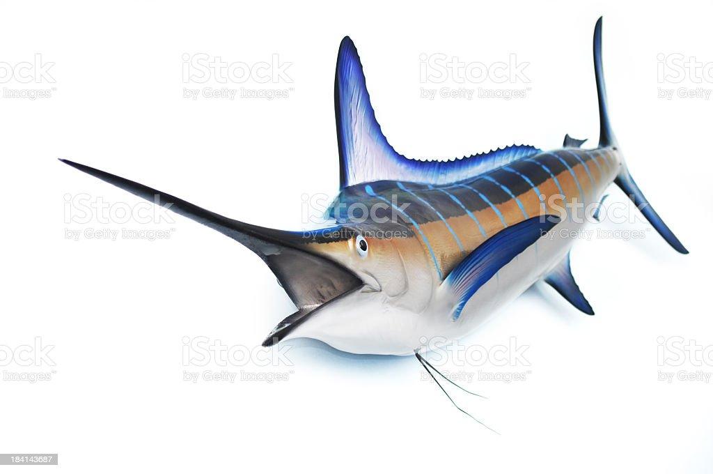 Marlin fish stock photo