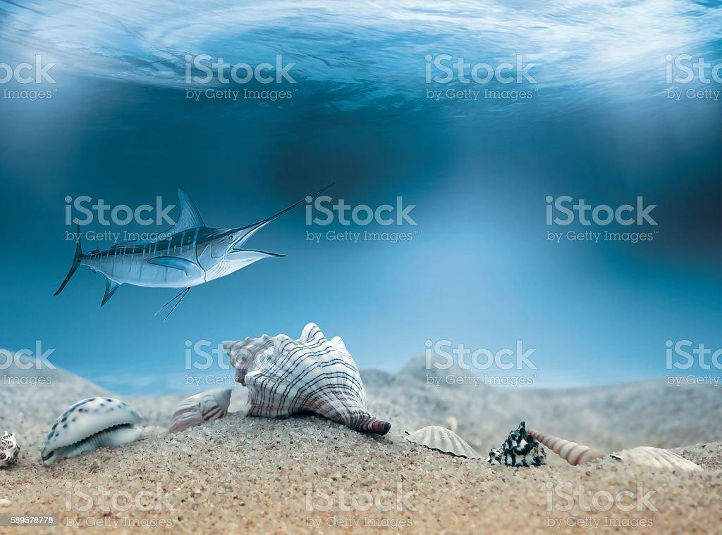 Marlin in a deep water stock photo