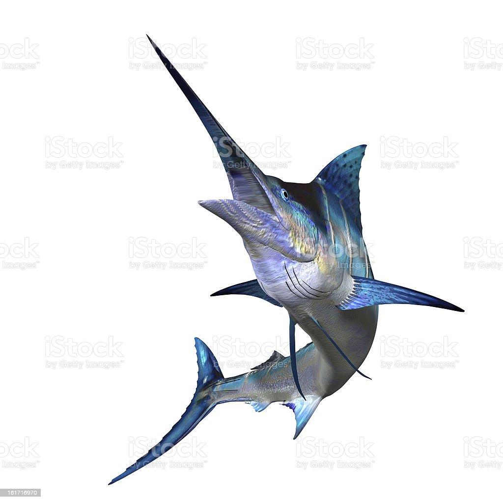 Marlin Profile stock photo