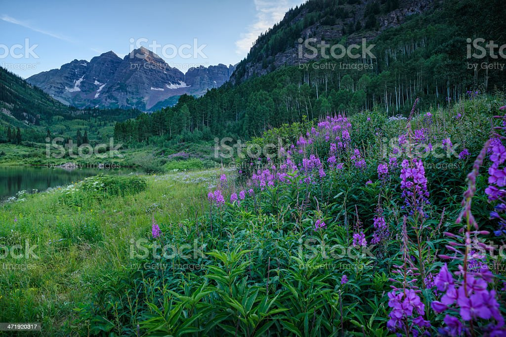Maroon Bells with Pink Flowers stock photo