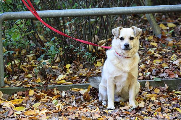 Ausgesetzt Hund – Foto