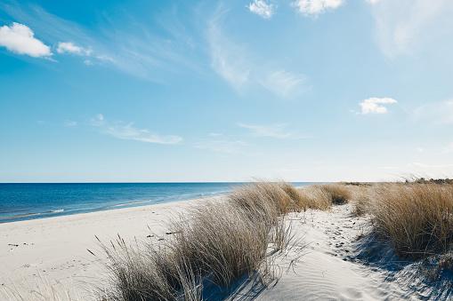 Marram grass at the beautiful beach near the coastline of the blue sea in northern Denmark.