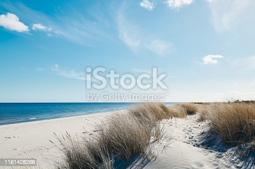 Marram grass at the beautiful beach near the coastline of the blue sea in northern Denmark.