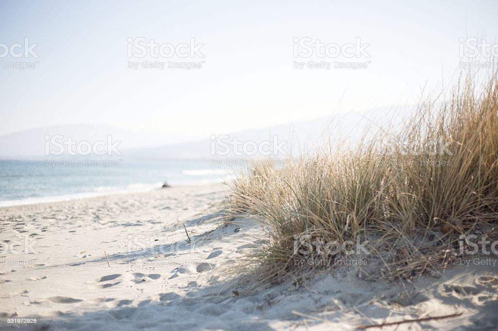 Marram grass on a sunny beach stock photo
