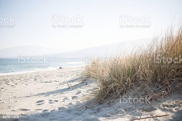 Photo of Marram grass on a sunny beach