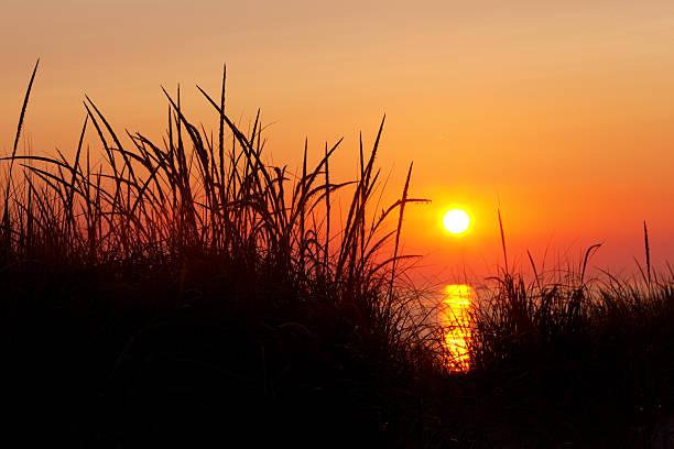 Marram Grass Silhouette at Sunset - Michigan Sunset