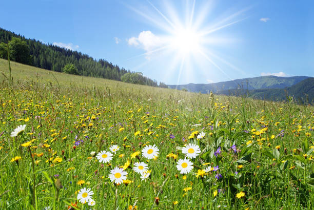 Marriages on a mountain meadow stock photo