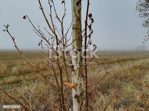 Tronco y pequeños tallos, junt a un terreno en tonos marrones y capa de escarcha en pleno invierno.