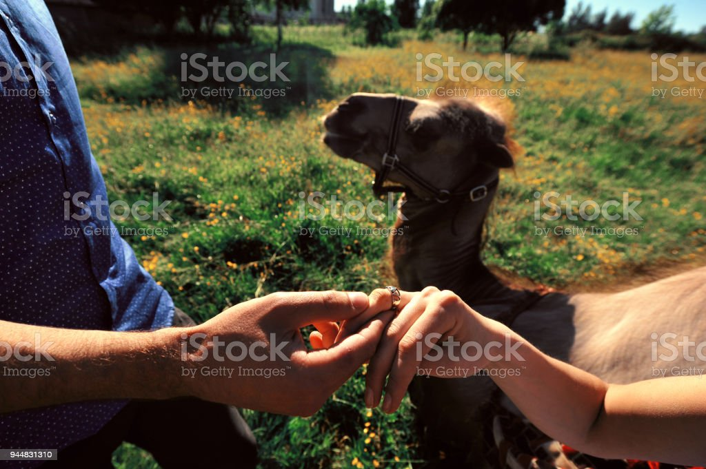Marry me. Horizontal shot of young man holding engagement ring while...