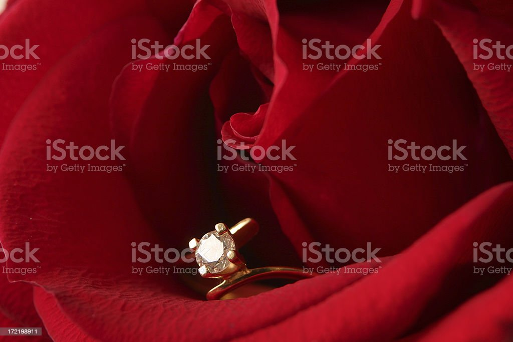 Red engagement rose close-up